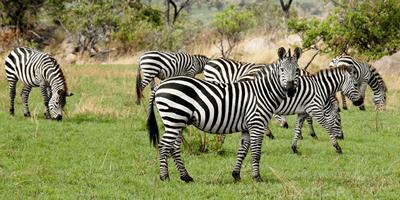 Selous Southern Tanzania 8Days