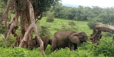 Ngorongoro Serengeti Tarangire 6Days