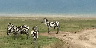 Tanzania Lodge Adventure 9Days