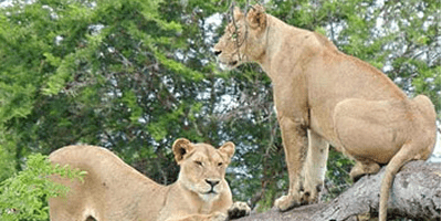 MasaiMara Serengeti 12Days